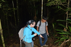 Marcy - rainforest