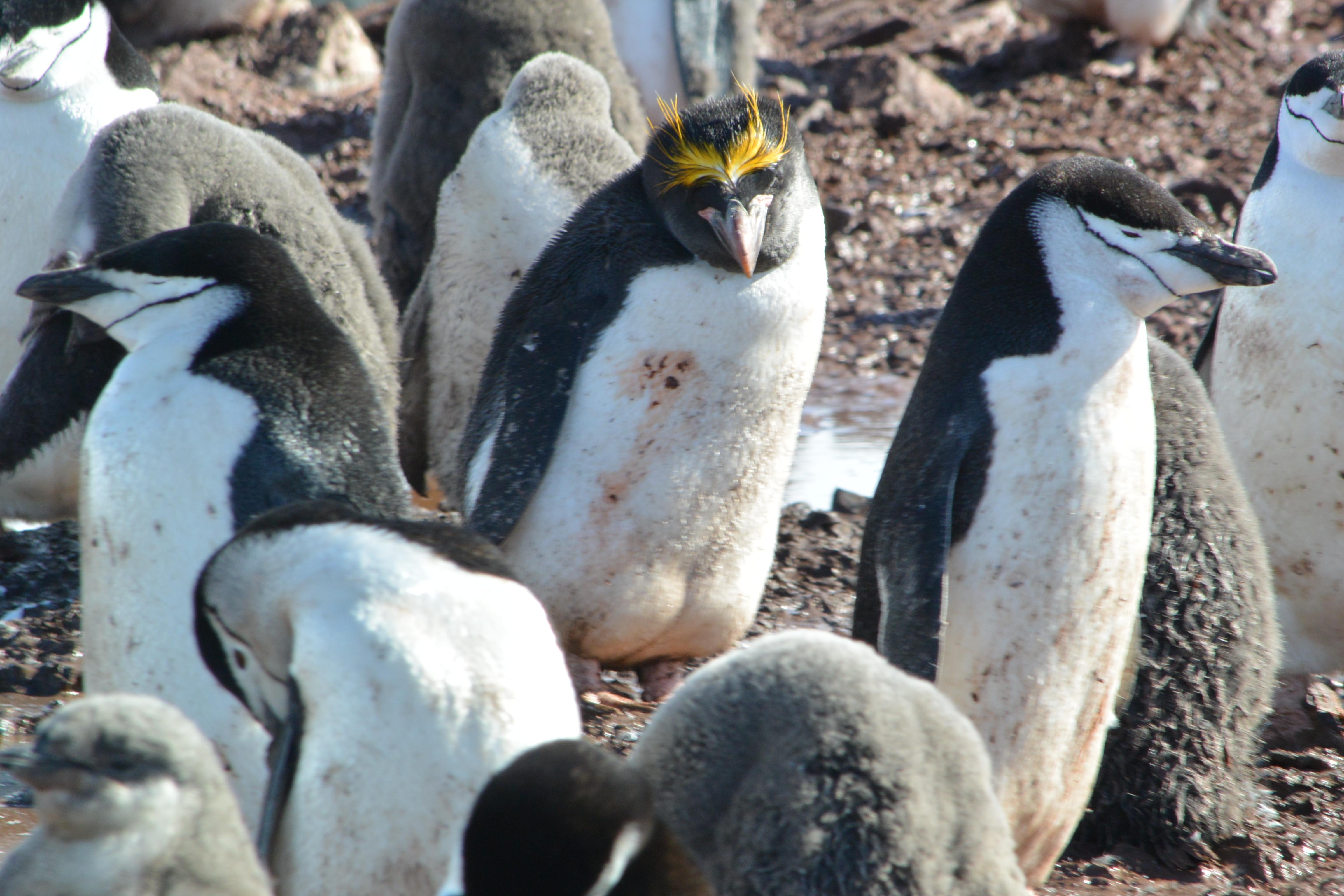 Pictures of animals found in antarctica