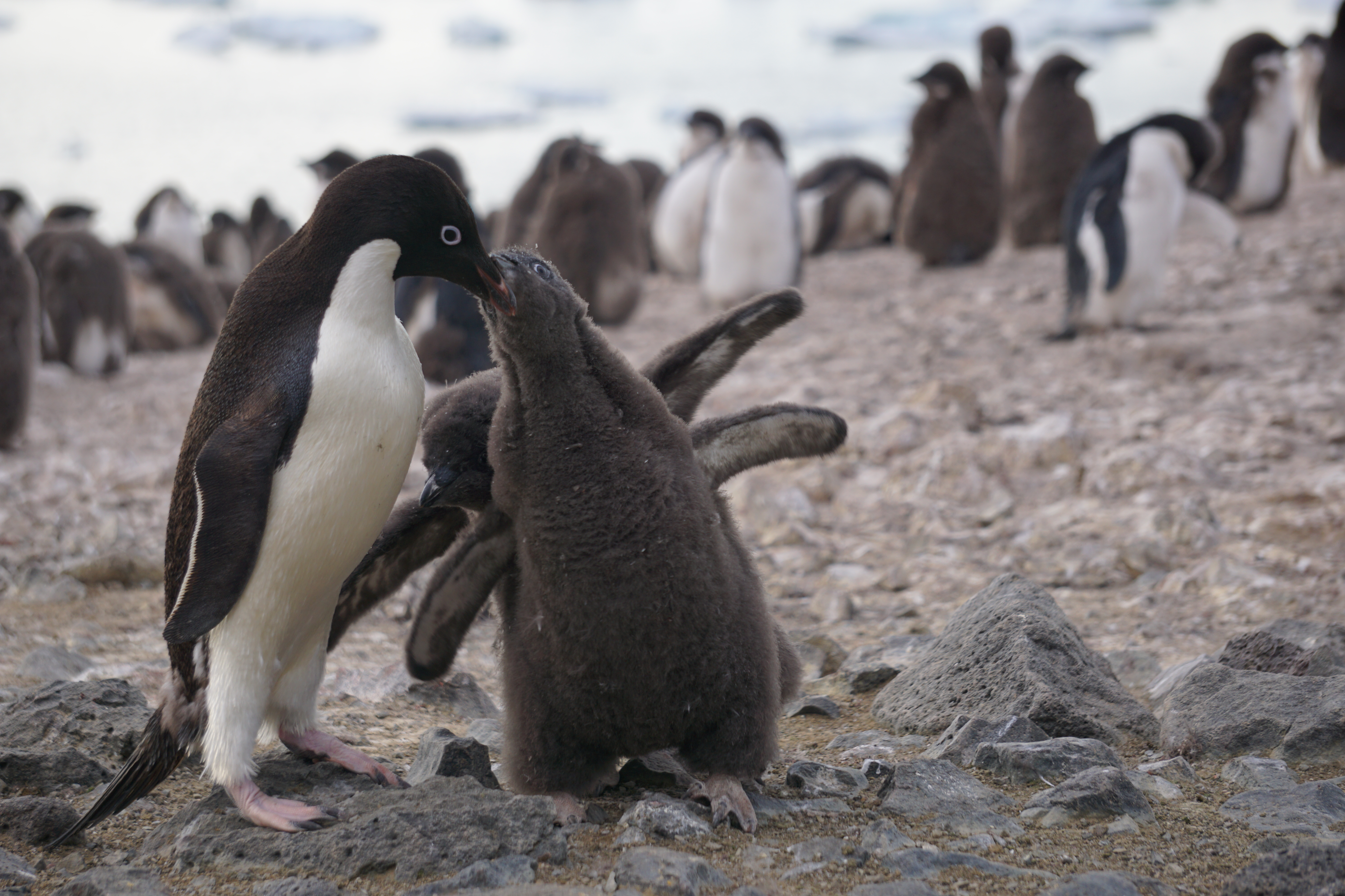 Antarcticas Hidden Caves Could Be Home to 'New World' of Pictures of animals found in antarctica