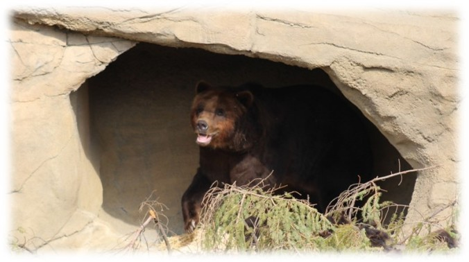 grizzly cave.jpg